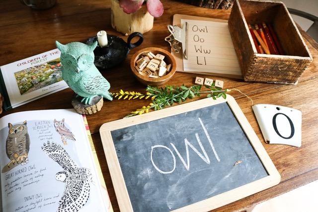 Owl lesson
