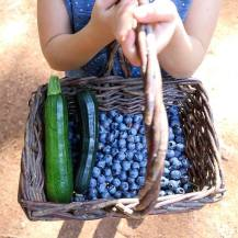 blueberry pickin